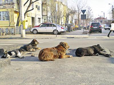 20091005094129-091005-perros.jpg