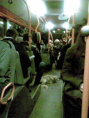 20100224161900-100224-autobuses.jpg