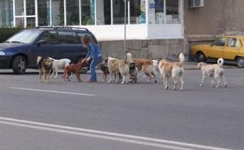 20111123143346-111123-perros-vagabundos.jpg